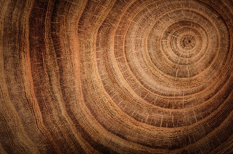 Tree ring showing annual growth rings with the word ABOUT